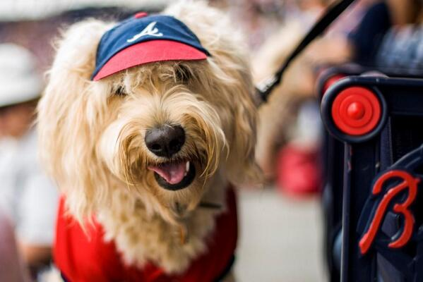 A photo tweeted by baseball team the Atlanta Braves for National Dog Day on Monday, Aug. 26, 2013.