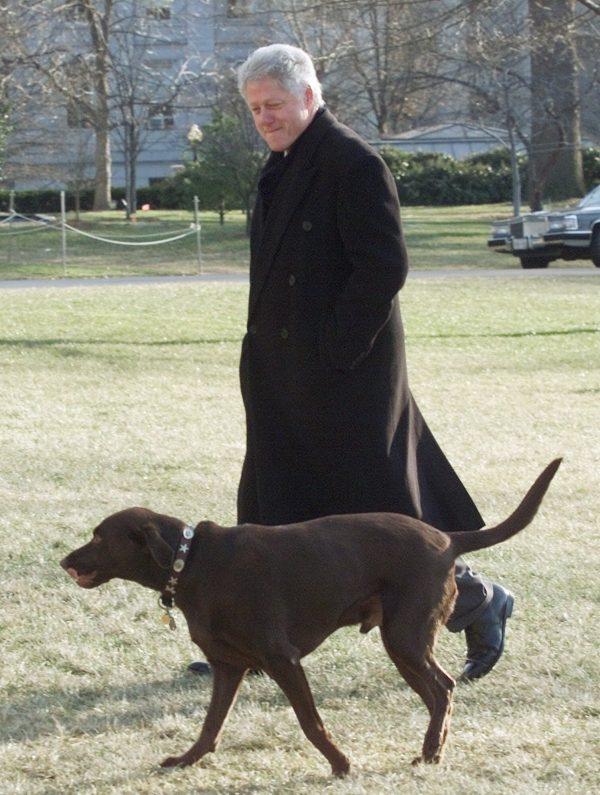 President Bill Clinton walks with his dog Buddy, a Chocolate Labrador Retriever, Jan. 2, 2001. (AP Photo/Ron Edmonds)