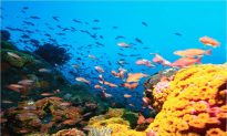 Andaman's Marine Life Laboratory; Five Star Science