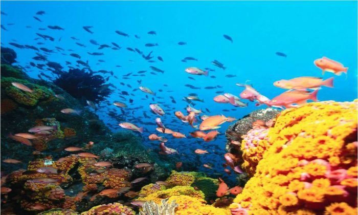Colorful and rich in species diversity, coral reefs represent only 0.15% of the ocean but support 25% of the species. If we lose them, we lose everything.
