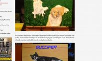 George W. Bush is Painting Cats Now After Around ' 50 Dogs'