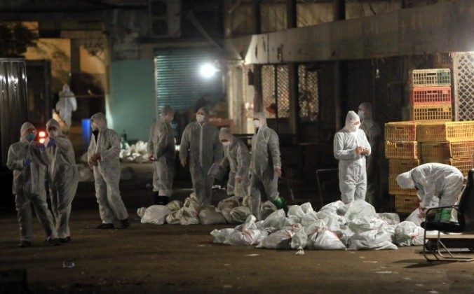 Chinese health workers collect bags of dead chickens at Huhuai wholesale agricultural market in Shanghai on April 5. A recent medical report says human to human transmission of the H7N9 virus is possible, but not probable. (STR/AFP/Getty Images)