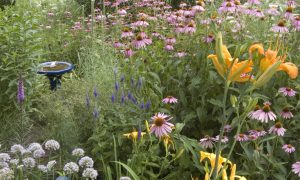 How to Attract Pollinators: 6 Must-Have Plants
