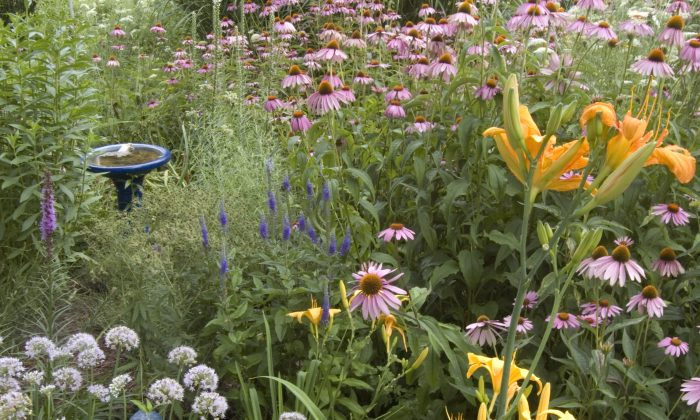 A pollinator garden is shown in this photo. With recent declines in bee populations, there is a growing awareness of the contribution pollinators make to the ecosystem, and to the human food supply. (Cat Rooney/Epoch Times)