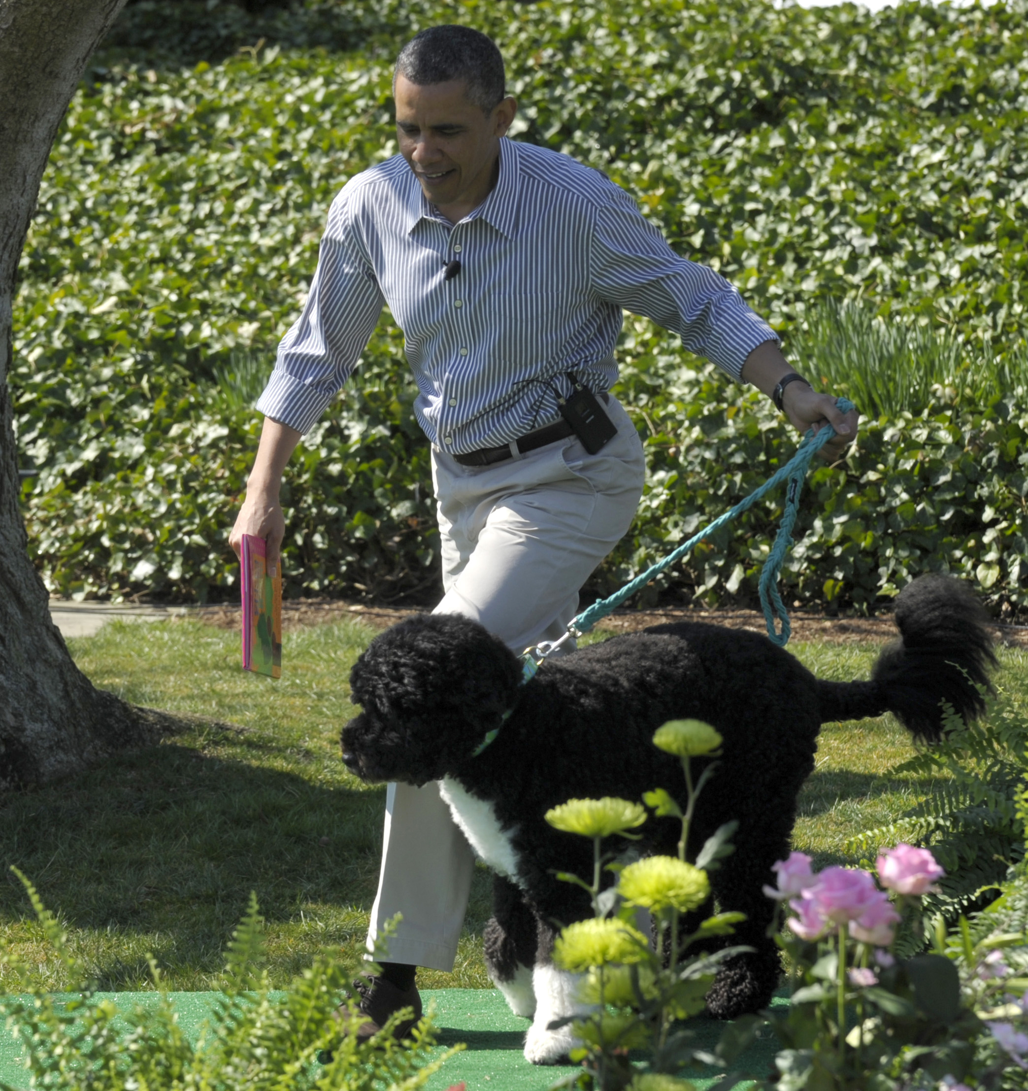 President Barack Obama arrives with his dog Bo, a Portuguese Water Dog, to read Chicka Chicka Boom Boom during activities at the annual Easter Egg Roll on the South Lawn of the White House in Washington, Monday, April 1, 2013. Bo was a present from Ted Kennedy. (AP Photo/Susan Walsh)
