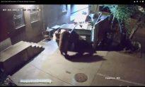 Bear Steals Dumpster From Colorado German Restaurant (+Video)
