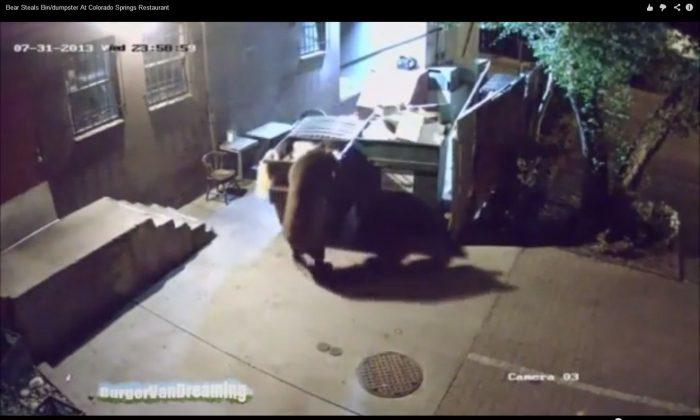 A screenshot of YouTube shows the bear.