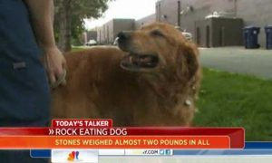 Dog Eats 16 Rocks, Is Expected to Survive After Surgery