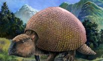 10 Amazing Creatures That Once Roamed America