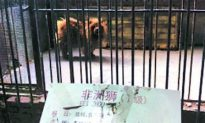 A Barking Lion in a Zoo? Only in China