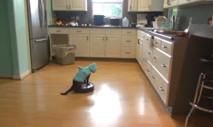 A screenshot of YouTube shows Max the Roomba cat in action.