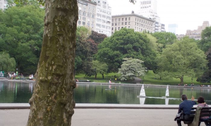 By the pond in Central Park. (Sarah Annalise Hack)