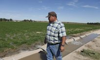 GM Alfalfa: Coexistence Won't Work, says Farmers Union