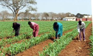 GMOs in Zambia: Facts at a Glance