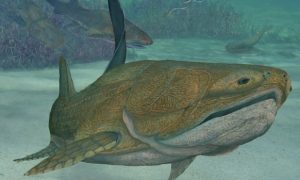 China: Fish Fossil Discovery Could Dramatically Shift Evolutionary History