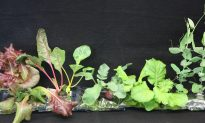NASA to Grow Lettuce in Space on ISS