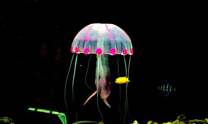 Luminescent Jellyfish (Shutterstock*)
