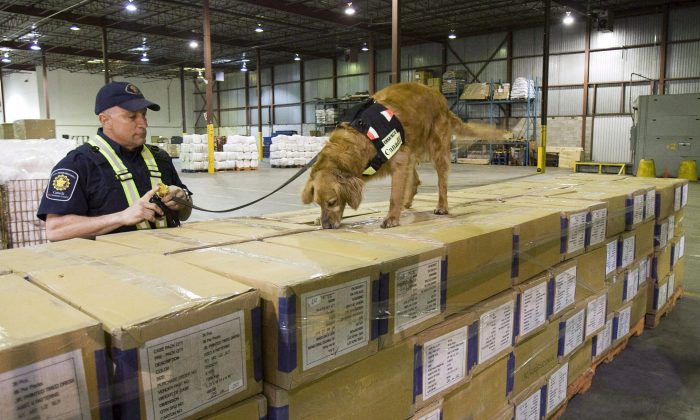 Canada Border Services Agency dog Grady sniffs through shipping boxes at a CBSA warehouse in Montreal in 2009.  (The Canadian Press/Paul Chiasson)