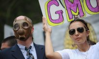 GM Debate Not Settled, Say European Scientists