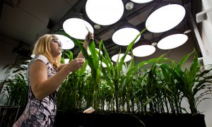 Germplasm Resources Are a 'Chip' in China's Strategy to Surpass the West
