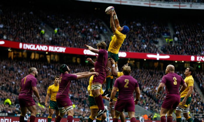 Nathan Sharpe of Australia wins line-out ball against England at Twickenham last year. (Tom Shaw/Getty Images)
