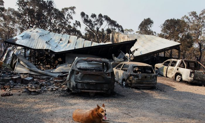 A dog sits near a home business destroyed by bushfire as seen on October 21, 2013 in Yellow Rock, Australia. One man has died and hundreds of properties have been destroyed in bushfires that are devastating the Blue Mountains and Central Coast regions of New South Wales. (Lisa Maree Williams/Getty Images)