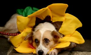 More Cute Than Spooky: Cat, Dog Halloween Photos