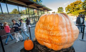 World's Biggest Pumpkins Carved by the Best in NYC