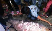 Chinese Villagers Plunder Fish Pouring Out of Reservoir