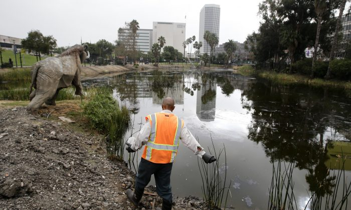 Victor Ball sprinkles mosquito-repelling granules along Lake Pit outside the George C. Page Museum at the La Brea Tar Pits in Los Angeles, Oct. 23. (AP Photo/Jae C. Hong)