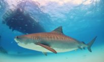 Are We Overfishing The Future of Sharks?