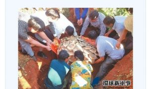 World's Largest Edible Mushroom Found in China