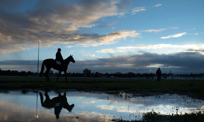 """General view of horses during trackwork at Flemington Racecourse in Melbourne. Trainers work hard but """"not everyone has good horses"""", says trainer Simon Zahra. (Vince Caligiuri/Getty Images)"""