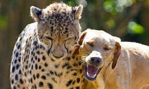 Cute Unlikely Animal Friends (+Videos +Photos)