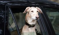 No More Dogs in Parked Cars, Say Michigan Lawmakers