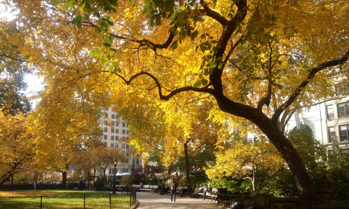 Madison Square Park in all its Fall glory, 2012. (Seth Holehouse/Epoch Times)
