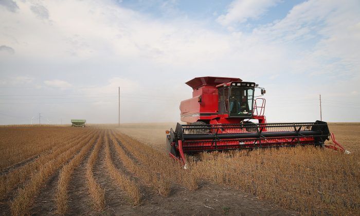 Minnesota soybeans harvested on Oct. 2, 2013. Crop insurance is designed to protect farmers and ranchers from unpredictable weather and market forces, but reformers want more limits on the subsidies. (Scott Olson/Getty Images)