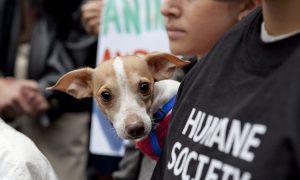 Animal Rights Activists Urge NY Gov. Cuomo to Sign Puppy Mill Bill