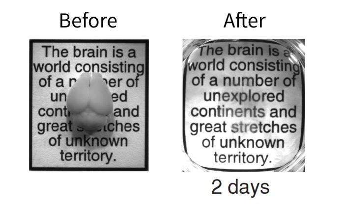 "Intact adult mouse brain before and after the two-day CLARITY process. In the image on the right, the fine brain structures can be seen faintly as the areas of blurriness above the words ""number,"" ""unexplored,"" ""continent"" and ""stretches."" http://med.stanford.edu/ism/2013/april/clarity.html#sthash.wN07wLza.dpuf"