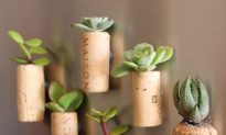 Cool DIY Gift Idea for Plant, Wine Lovers: Plants Grow in Fridge Magnets, Recycled Corks