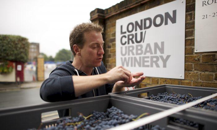 Gavin Monery, winemaker at London's first winery, London Cru (Ian Stirling)
