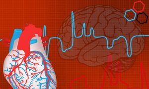 How the Heart Is Like a 'Little Brain': Which Is Really in Control?