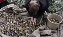Proper Olive Oil: What Most Americans Don't Know