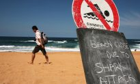 Australian Sharks to Be Killed en Masse by Government