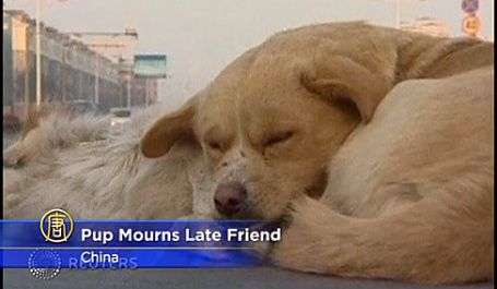 A dog in China refuses to leave the side of another dog who was hit and killed. (Screenshot/NTD Television)