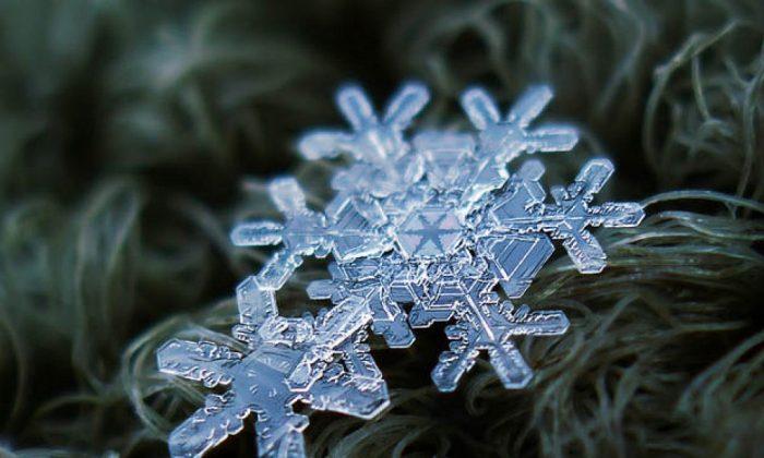 Alexey Kljatov captures the unique beauty of real snowflakes in his photographs.  (Alexey Kljatov)