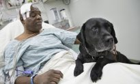 Woman Reunites With Guide Dog That Saved Her