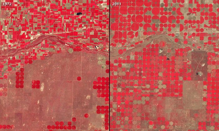 "Growth of Central Pivot Irrigation, Kansas, 1972 and 2011: Over the past 60 years, farmers in America's breadbasket have been pumping groundwater for irrigation using a technique called ""center-pivot irrigation."" The image shows Garden City, Kansas on Aug. 16, 1972 (L), and Aug. 14, 2011 (R). The false-color images show healthy vegetarian as bright red, and sparse grasslands or fallow fields as shades of green. (Robert Simmon/NASA/Landsat data from the USGS Global Visualization Viewer)"