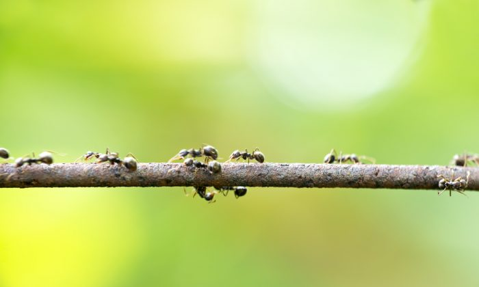 A stock photo of ants (*Shutterstock)