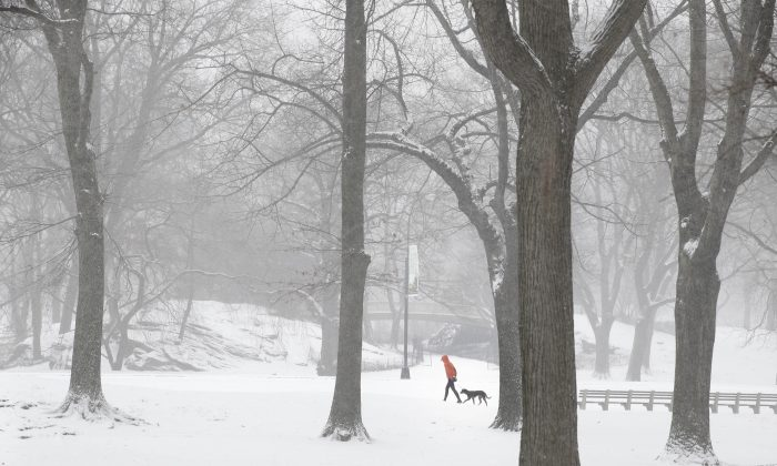 A person walks a dog through snowy Central Park in the Manhattan borough of New York on Tuesday, Jan. 21, 2014. (AP Photo/Seth Wenig)